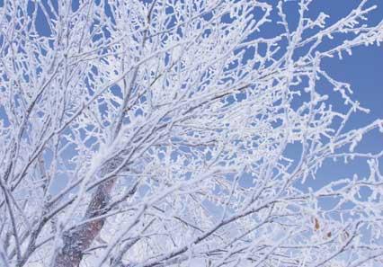 Invierno leyendo se entiende la gente for Imagenes de patios de invierno