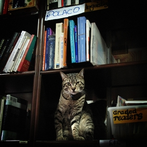petra-s-international-bookshop